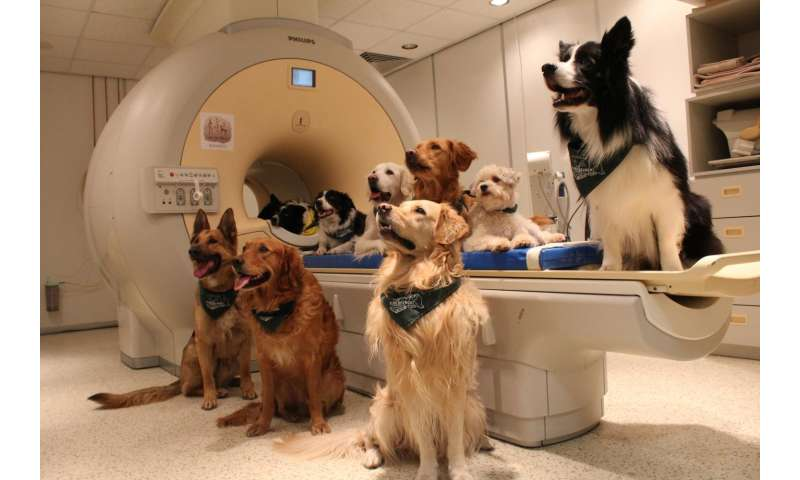 Dogs understand both vocabulary and intonation of human speech