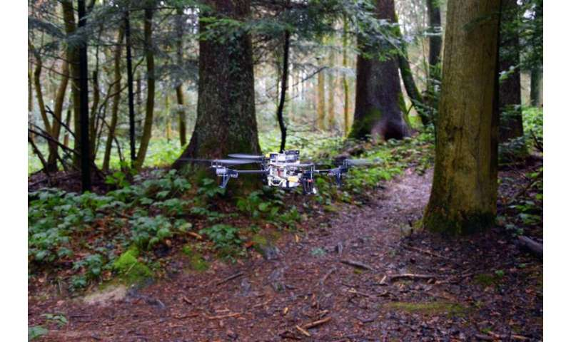 Drones learn to search forest trails for lost people