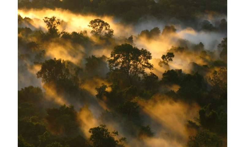 Drought stalls tree growth and shuts down Amazon carbon sink, researchers find