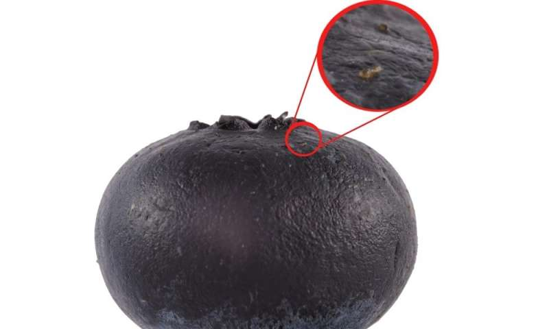 Dung excreted on fruits by vinegar flies contains sex pheromones and invites conspecifics to join the meal