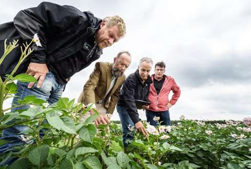 Durably resistant potatoes with wild potato genes offer 80% reduction in chemical control
