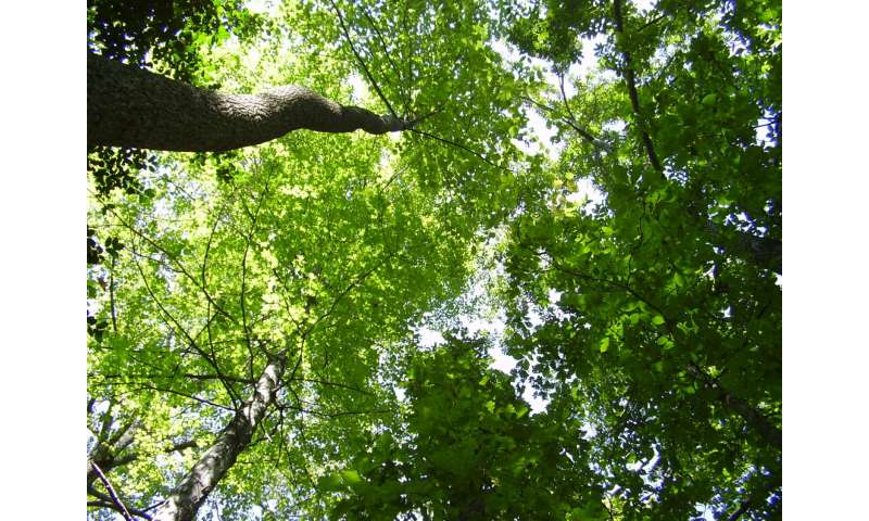 Eastern forests use up nitrogen in soil during earlier, greener springs