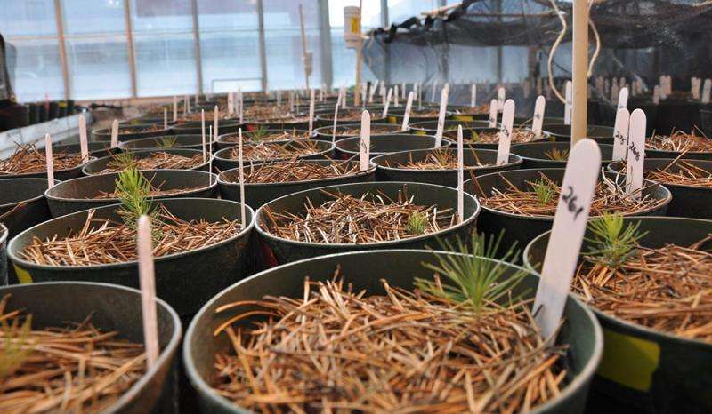 Ecologists compile huge soil fungi database