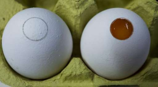Eggs pictured after an incision by laser (L) and after a part of the shell is removed to allow analysis by spectrometer