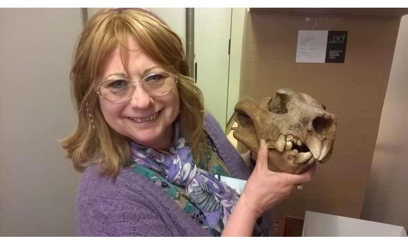 Elbows of extinct marsupial lion suggest unique hunting style