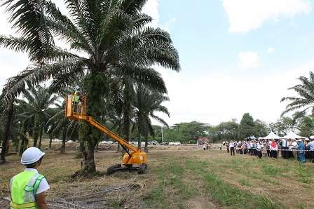Electric E Cutter Can Reach Oil Palm Trees As High As 30 Feet