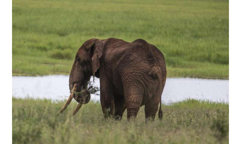 Elephant poaching costs African economies $25 million per year in lost tourism revenue