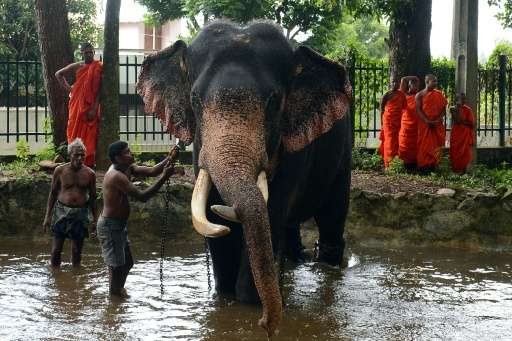 Elephants are considered sacred and are protected by law in Sri Lanka, but a Buddhist monk and a judge are among dozens under in