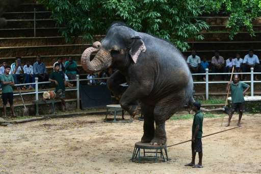 Elephants perform a routine at the zoo in Dehiwala near Colombo, Sri Lanka, where an illegal trade in baby elephants is being fe