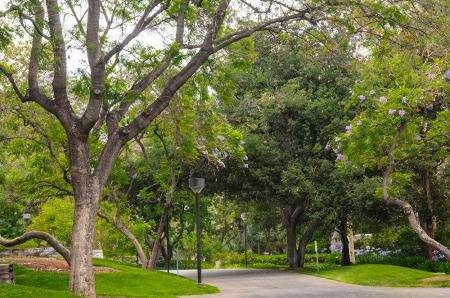 Engineers teach machines to recognize tree species