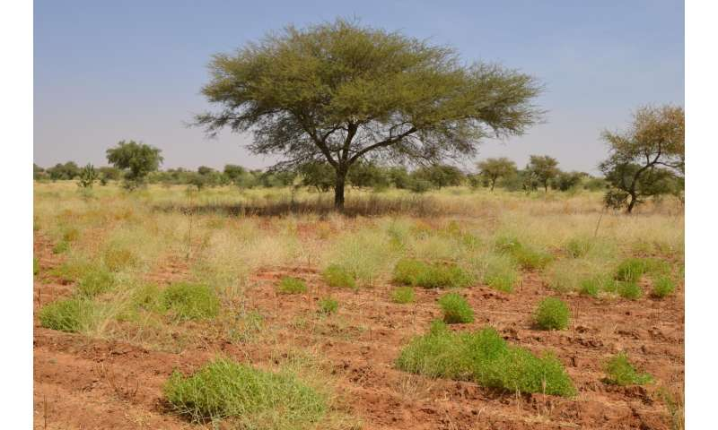 ENSO threatens food supply in southern Africa