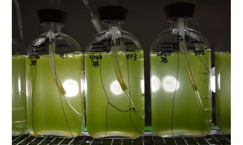 Enzyme discovery leads scientists further down path to pumping oil from plants