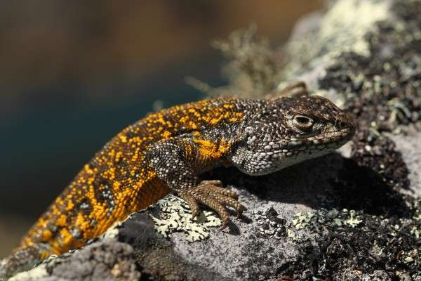 Expedition scientists in Bolivia discover 7 animal species in world's most biodiverse protected area