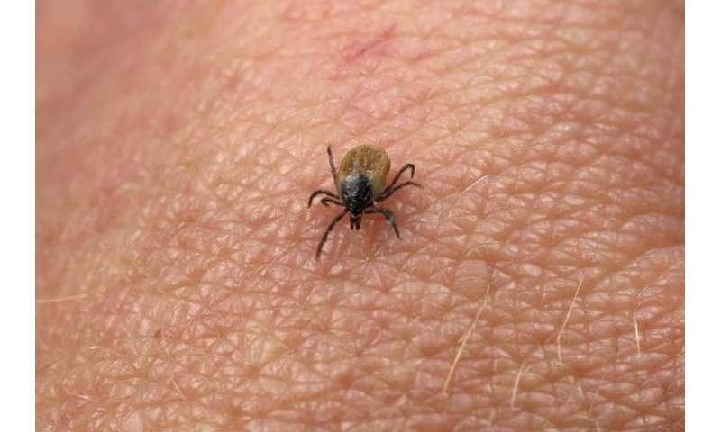 Expert warns of new tick-borne disease