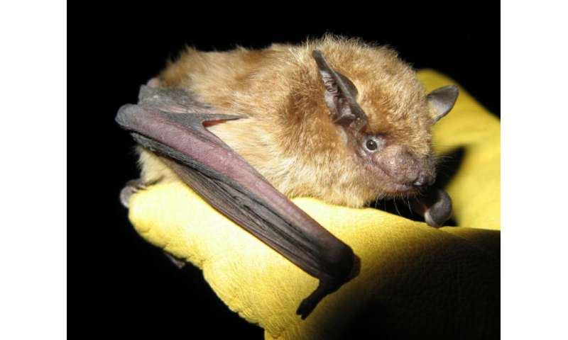 Explaining species differences in bat mortality from white-nose syndrome