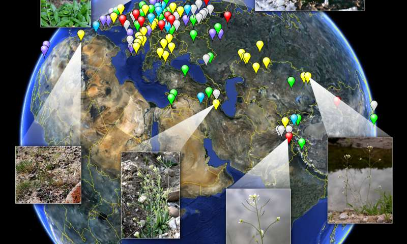 Extensive variation revealed in 1,001 genomes and epigenomes of Arabidopsis