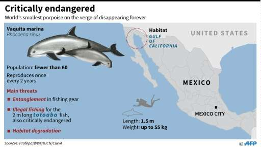 Factfile on the critically endangered vaquita marina porpoise
