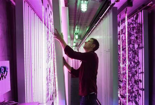Farm in a box: Shipping containers reused for fresh produce