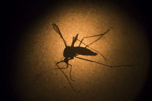 FDA: No significant impact from test of modified mosquitoes