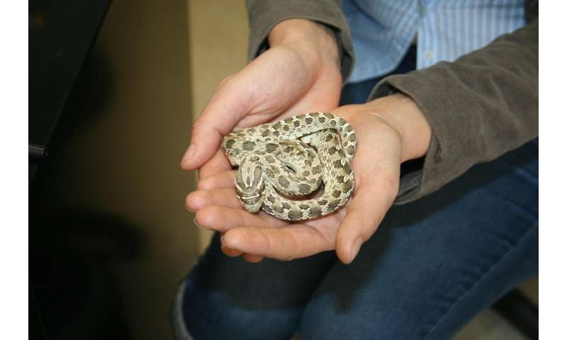 Feast without fear: USU scientist says more snake species resist toxin