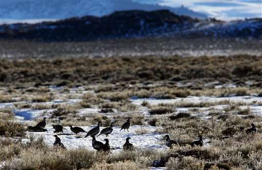 Federal oil, gas leases stall over bird concerns in US West