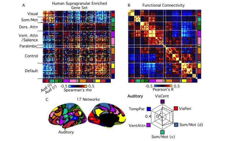 Fig. 1. Transcriptional profiles follow cortical subtypes and network topography