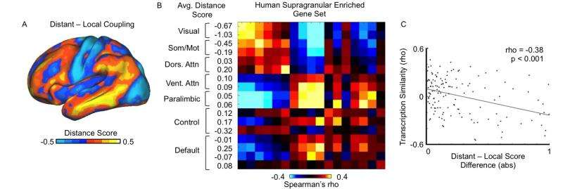 Fig. 7. Balance of local and distant coupling predicts transcriptional similarity