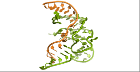 First 3-D structure of the enzymatic role of DNA