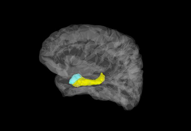 first direct evidence for ultra fast responses in human amygdala to fear