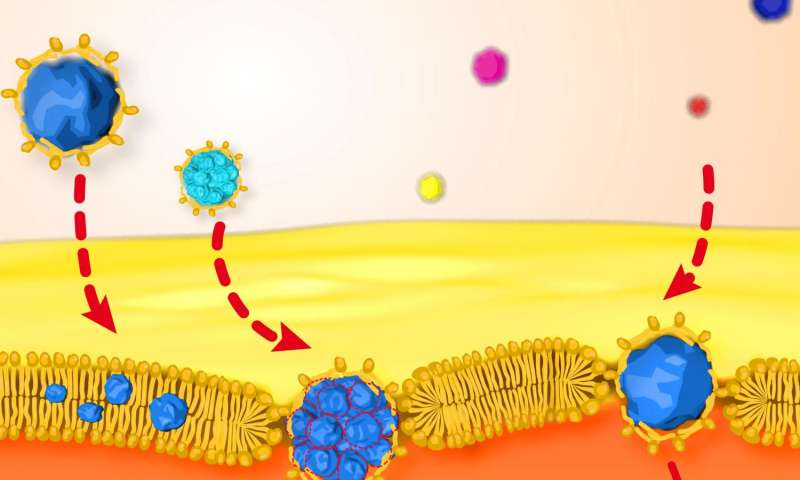 First time physicists observed and quantified tiny nanoparticle crossing lipid membrane