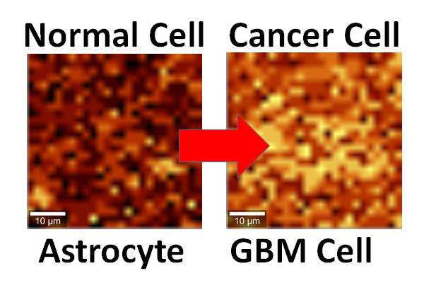 First use of graphene to detect cancer cells
