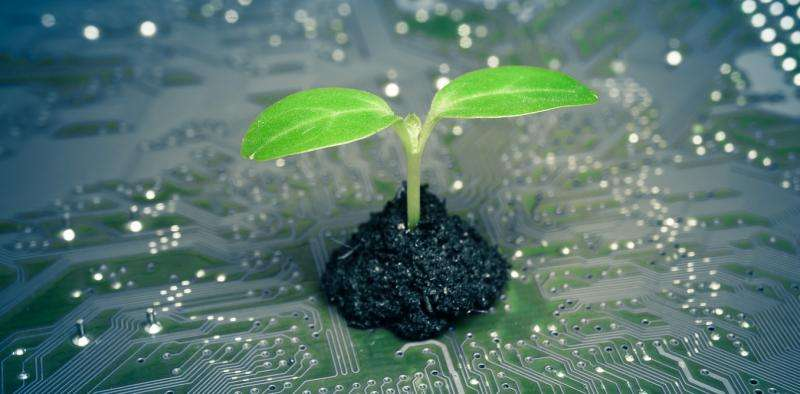 Five amazing ways plants have created new technologies