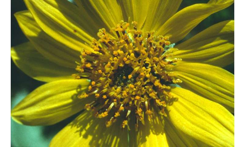 Flight of the bumble bee reveals plants' flair for flower arranging