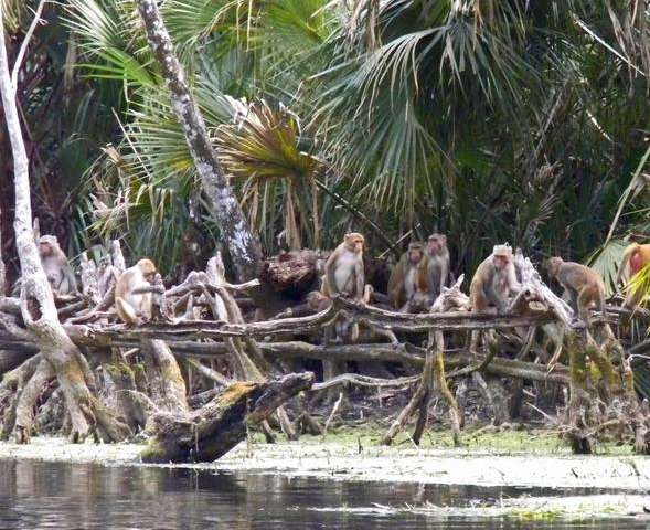 Florida's monkey river