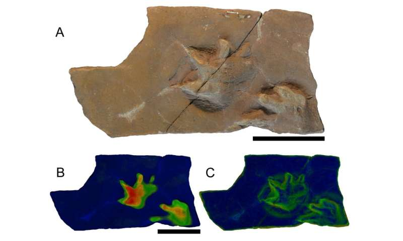 Fossil footprints give glimpse of how ancient climate change drove the rise of reptiles