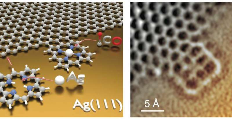 Fused tetrapyrroles to graphene edges