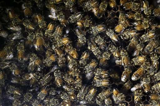 Garden-care giant to drop chemicals linked to bee declines