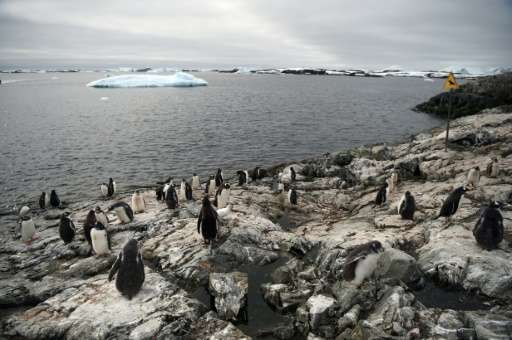 Gentoo penguins pictured on the shore of Vernadsky Research Base, a Ukrainian Antarctic Station at Marina Point on Galindez Isla