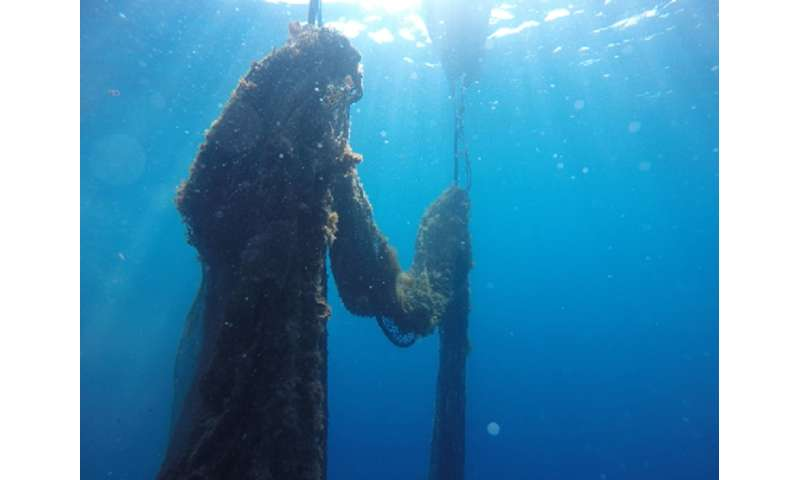 Ghost fishing net removed in the Medes Islands marine reserve in Catalonia