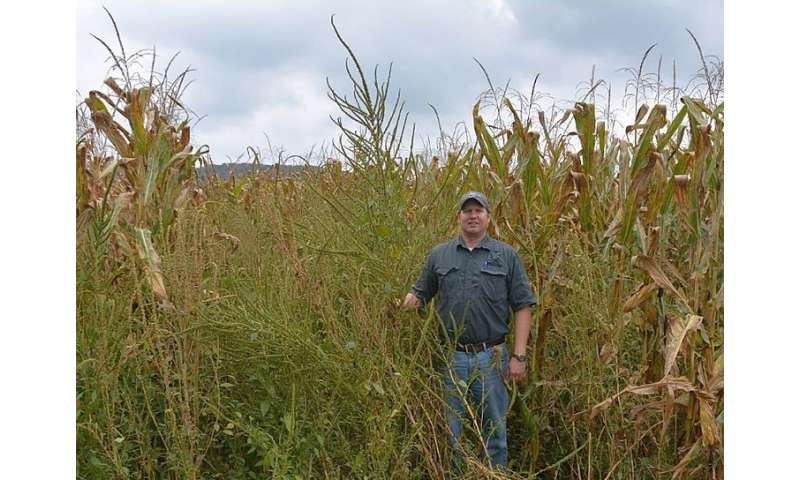 Growers cautioned to be on the lookout for invasive pigweeds