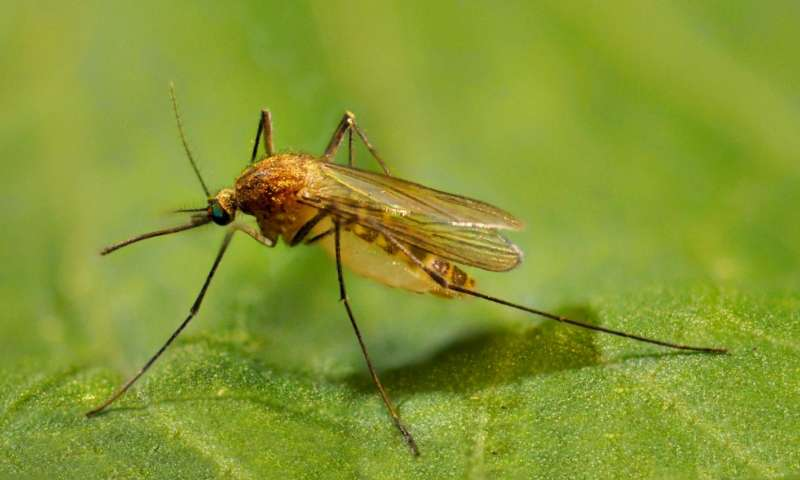 Growing mosquito populations linked to urbanization and DDT's slow decay