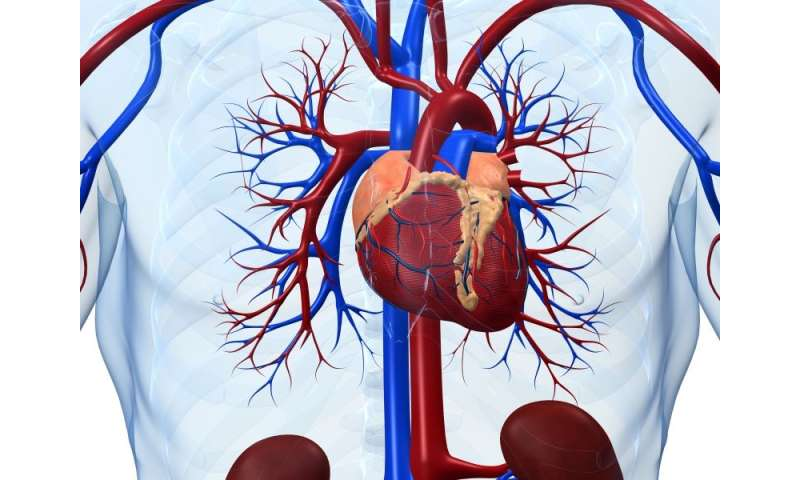 HDL-C prediction of heart disease modulated by TG, LDL-C