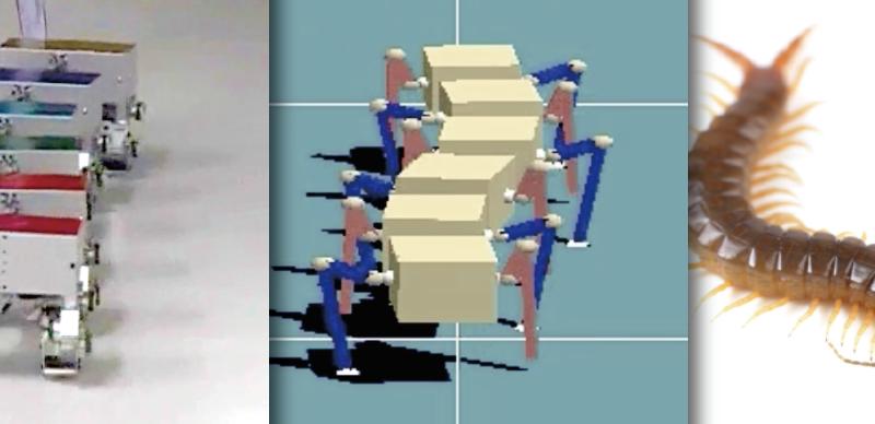Hey robot, shimmy like a centipede