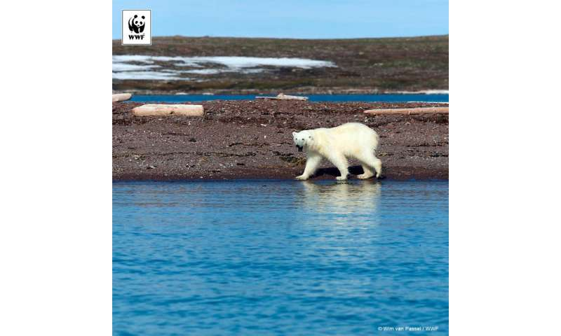 Historic low levels of Arctic sea ice signal trouble for Arctic wildlife