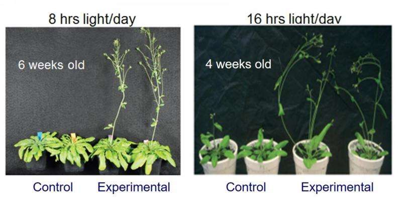 HKU discovers a new plant growth technology that may alleviate climate change and food shortage