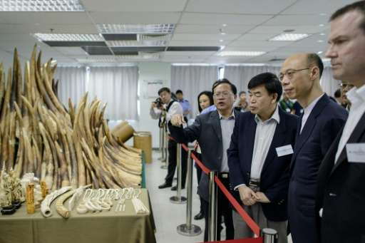 Hong Kong Secretary for the Environment Wong Kam-sing (2nd right) inspects seized ivory on display on May 15, 2014