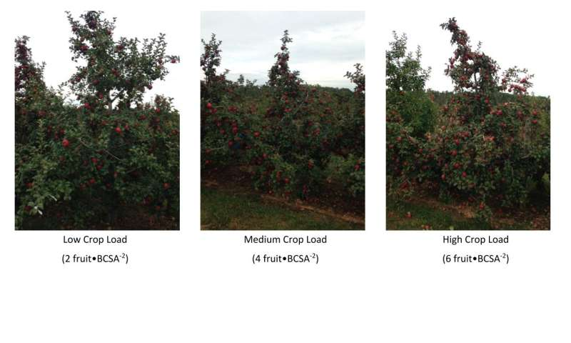 How crop load density affects apple juice, hard cider quality