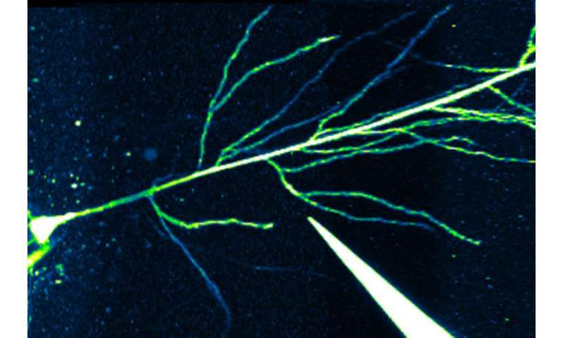 How drugs can help your brain encode memories