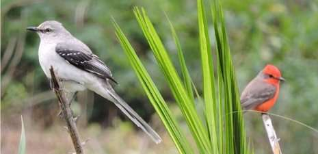 How oil palm affects bird habitat in Mexico