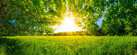 How plants adjust photosynthesis in response to fluctuating light intensities